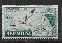 BERMUDA   1953 Local Motives And Queen Elizabeth II   *  Phaeton Lepturus - Bermuda