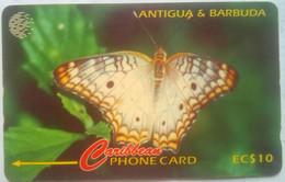 132CATA Ten Eye Butterfly - Antigua And Barbuda