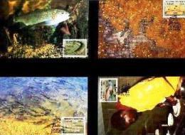 CISKEI, 1989, Trout Hatcheries,  Mint Maxicards, Nr(s.) 76-79 - Ciskei