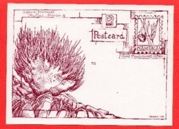 NAMIBIA,  Mint Maxi Card S, (without Stamps),Postcard,   F3843 - Namibia (1990- ...)