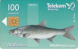 SLOVENIA SCHEDA TELEFONICA Bolen / Mura V Vasi Krog - PESCE - Schede Telefoniche