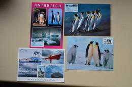 Chili Lot 7 Cartes Maximum Pingouin Pinguino Antarctica Antarctique Penguin Maxicard Chile - Turtles