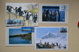 Argentine Lot 5 Cartes Maximum Pingouin Pinguino Antarctica Antarctique Penguin Maxicard Argentina - Turtles