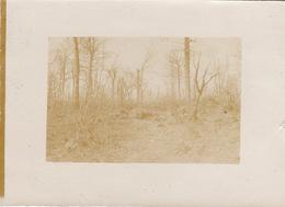 Photo Mars 1916 FLEURY-DEVANT-DOUAUMONT - Dans Les Bois De Souville (A200, Ww1, Wk 1) - Guerre 1914-18