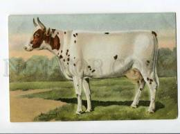 270023 RUSSIAN BUNGART Ayrshire Cow Vintage BAGGOVUT Postcard - Künstlerkarten