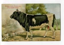270028 RUSSIAN BUNGART Breton Bull Vintage BAGGOVUT Postcard - Illustrateurs & Photographes