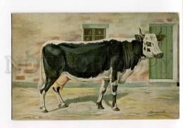 270036 RUSSIAN BUNGART Black & White Cow Vintage BAGGOVUT PC - Künstlerkarten