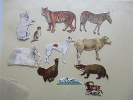 ANIMAUX 11 DECOUPIS - Tiere