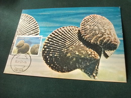 Conchiglia Shell  COQUILLES   CONCHAS   MAXIMUM  FRANCOBOLLO GRECIA KOXUAIA - Pesci E Crostacei
