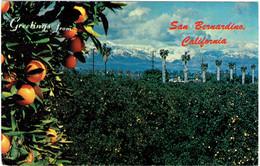CPM ETATS-UNIS CALIFORMIE SAN BERNARDINO - Orangeraie Face Aux Montagnes - 1978 - San Bernardino