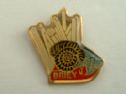 Pin's BRIEY - AQUAMINEROS - FOSSILE - COQUILLAGE - SCALAIRE - Animali