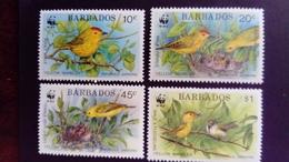 Barbades Barbados 1991 Animal Oiseaux Birds WWF Yvert 804-807 ** MNH - Barbados (1966-...)