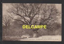 DD / 70 HAUTE SAÔNE / BRESILLEY (ENVIRONS DE PESMES) / LE GROS CHÊNE , ENVIRONS 500 ANS , 8 M. DE TOUR / CIRCULÉE 1933 - France
