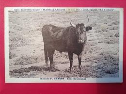 "MARSILLARGUES- Gala Tauromachique -Club Taurin ""LA SOUNAIA"" Manade F.GRANON 10 Mai 1931 - France"