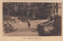 SANKT VITH / SAINT VITH / ROUTE DANS LA FORET  1934 - Saint-Vith - Sankt Vith