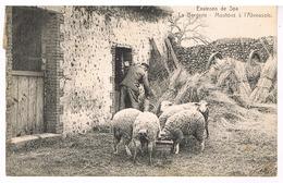 Environs De Spa - La Bergerie - Moutons à L'abrevoir - Belgium