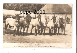 Carte Photo Originale 52 PEIGNEY Concours Chevaux De TROYES 1934  M. Dongois - Photo CHAMBRY Petit Quévilly - Autres Communes