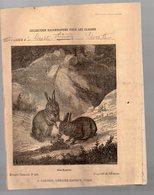 Cahier D'écolier Avec Couverture Illustrée : Histoire Naturelle N°266 Les Lapins (PPP9432) - Animaux