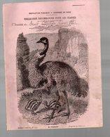 Cahier D'écolier Avec Couverture Illustrée : Histoire Naturelle N°112 Le Casoar (PPP9433) - Animaux