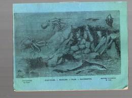 Cahier D'écolier Avec Couverture Illustrée : Histoire Naturelle N°118: Pieuvres, Moules, Plie, Roussette (PPP9434) - Animaux