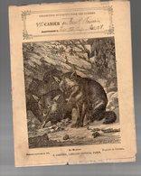Cahier D'écolier Avec Couverture Illustrée : Histoire Naturelle N°171 Le Renard  (PPP9435) - Animals
