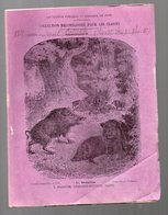Cahier D'écolier Avec Couverture Illustrée : Hstoire Naturelle N°119 Le Sanglier  (PPP9438) - Animals