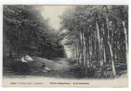 Heide-Calmpthout  -  In De Bosschen F.Hoelen 4038   1909 - Kalmthout