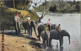SRI-LANKA ELEPHANTS CROSSING RIVER CEYLON CEYLAN ELEPHANT INDE INDIA - Sri Lanka (Ceylon)