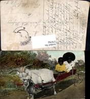 579792,Make Way For De Kentucky Express Kinder M. Ziegengespann Ziege Humor Tiergespa - Tierwelt & Fauna