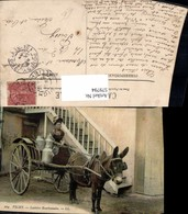 579794,Vichy Laitiere Bourbonnaise Eselgespann Esel Milchtransport Frau Tiergespann - Tierwelt & Fauna