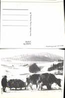 579795,Motiv Riesengebirge Kuhgespann Rinder Schlitten I. Schnee Tiergespann - Tierwelt & Fauna