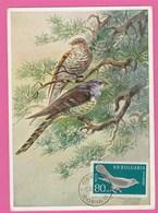 Carte Maximum - Oiseaux - Coucou Gris - Bulgarie - Cuckoos & Turacos