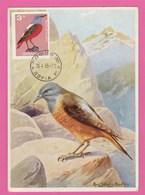 Carte Maximum - Oiseaux - Merle De Roche  - Bulgarie 1965 - Oiseaux