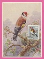 Carte Maximum - Oiseaux - Chardonneret  - Bulgarie 1965 - Oiseaux