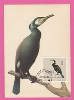 Carte Maximum - Oiseaux - Cormoran - Pologne - Altri