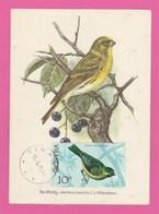 Carte Maximum - Oiseaux - Serin - Albanie - 1972 - Moineaux