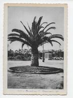Noto - Giardina Pubblico - Formato Grande (1940) - Italië