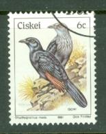 Ciskei: 1981/90   Birds   SG10   6c    Used - Ciskei