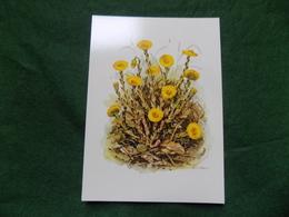 ART CARD: BJORN GIDSTAM Tussilago Flowers Sweden - Fiori