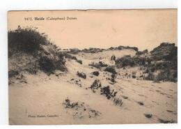 9472. Heide (Calmpthout) Duinen Photo Hoelen,Capellen - Kalmthout