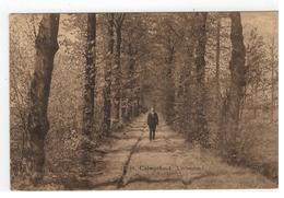 10364.Calmpthout  Lindendreef Photo Hoelen, Cappellen - Kalmthout