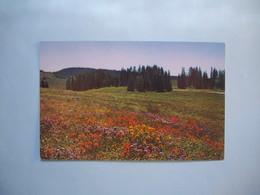 Cedar Breaks National Monument  -  UTAH - Monument Valley