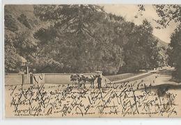 Irlande Wicklow Glen Of Downs 1904 - Wicklow
