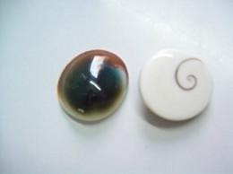 Cypraea Carneola Propinqua Tahiti  N°2  Dwarf - Seashells & Snail-shells