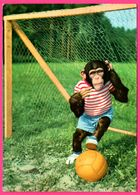 Monkey - Bébé Singe Jouant Au Football - But - Foot - Gebr. SPANJERSBERG - Monos