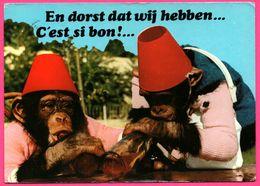 Monkey - Singe Buvant De L'alcool - Singes Alcooliques - Sigy Le Chatel - Jardin Zoologique Gué Gallet - A. VAN MIEGHEM - Monos