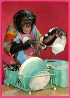 Monkey - Maman Singe Faisant La Vaisselle - Tablier - KRUGER - Monos
