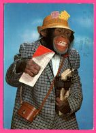Monkey - Singe Touriste Avec Jumelle - Journaux - ANCO - 1979 - Monos