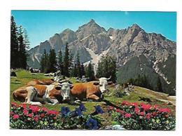Grüss Aus Den BERGEN - Viehzucht