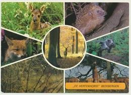 AK  De Hertenhorst Beekbergen Wildpark - Animaux & Faune